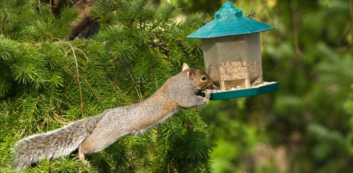 how-keep-squirrels-away-bird-feeder-1