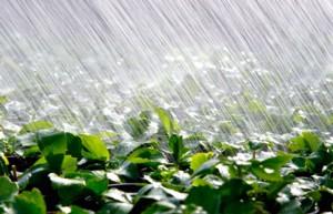 raining-onto-crops_web