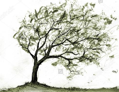 stock-photo-tree-in-storm-16912375
