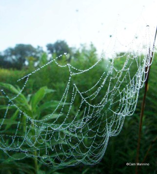 spider-web-dew1